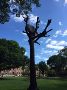 Giuseppe Penone Sculpture on Brown campus